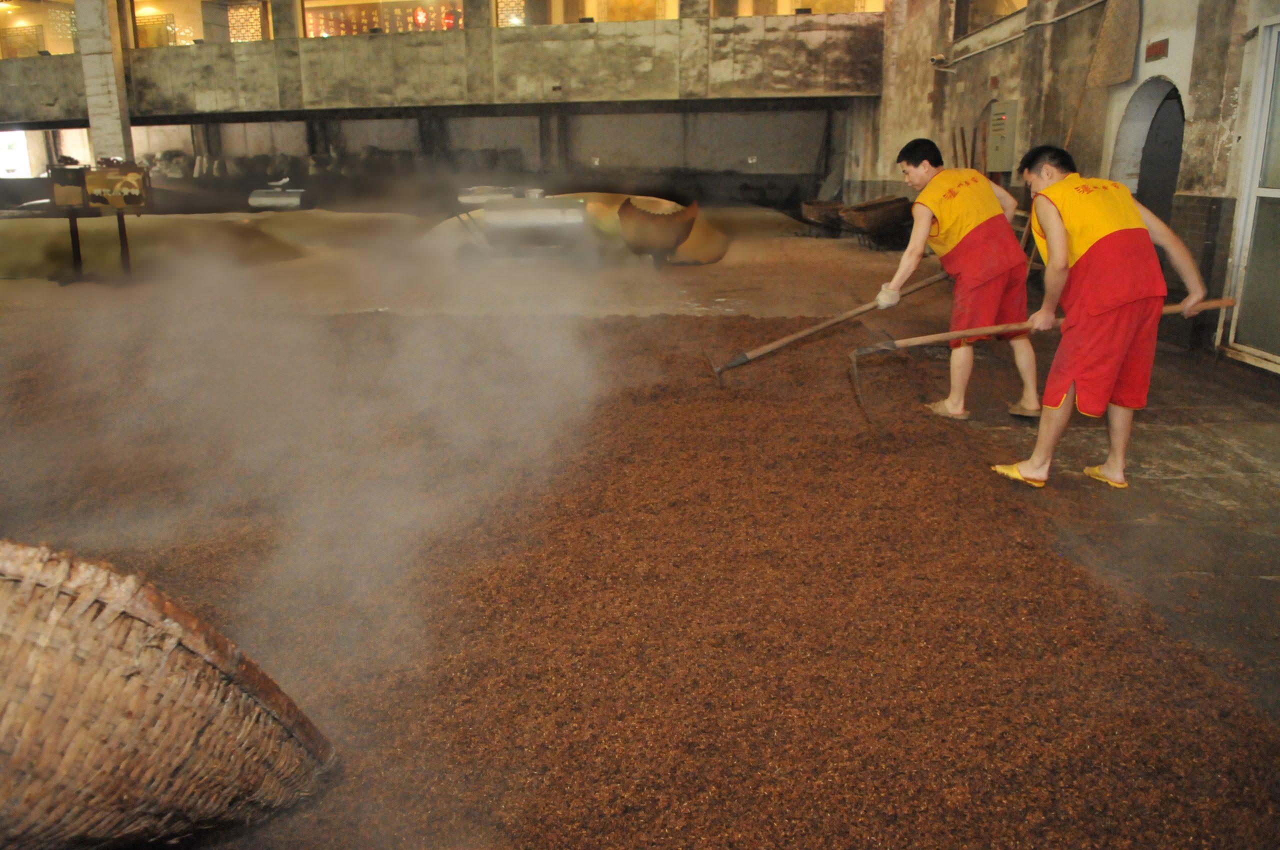 Cooling grains at luzhou laojiao baijiu distillery